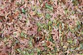 Dry leafs on the ground