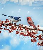 Digital Painting Of Birds  In Winter