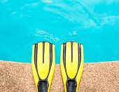 Pair Of Yellow Fins