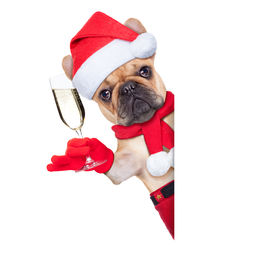 image of french toast  - santa claus christmas dog toasting cheers with champagne glass besides white blank placard or banner isolated on white background - JPG