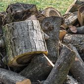 stock photo of wood pieces  - Trunk of tree torn to pieces with an ax - JPG