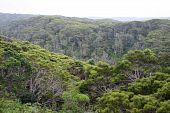 Hawaiian Jungle
