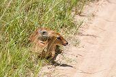 stock photo of antelope horn  - Safari - JPG