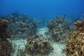 foto of off-shore  - Atlantic ocean coral reef off the shores of Bahamas - JPG
