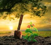 foto of strawberry plant  - flowers plant and gardening tool against beautiful sunlight in green park use for people activities and growing tree in plantation field - JPG