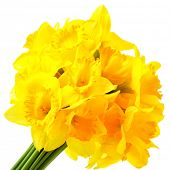 stock photo of narcissi  - Bunch of yellow narcissuses isolated over the white background - JPG