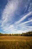picture of prairie  - A beautiful autumn scene with colorful autumn colors in the distant trees to look at - JPG
