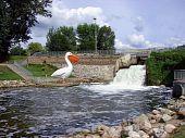large metal pelican statue river dam