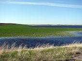 flooded agriculture field crop