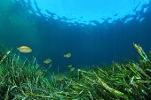 foto of plankton  - Underwater background with seaweed and fish - JPG