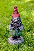 stock photo of gnome  - A zombie gnome stands watch in the grass - JPG