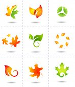 pic of tendril  - nature icons autumn leafs - JPG