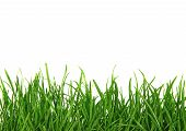stock photo of grass  - Green Blades of Grass Isolated on White Background - JPG