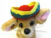Mexican Pup