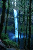 Silver Falls And Ferns