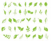 Set of hand drawn leaves, green leaf, sketches and doodles of leaf and plants, green leaves vector c poster