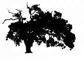 Árvore de carvalho de silhueta vector