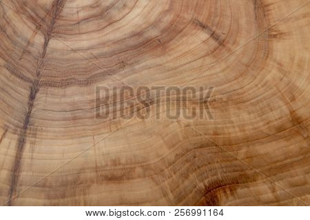 Tree Cut Wooden Texture Of