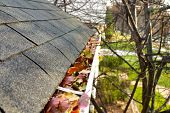 Fall Cleanup - Leaves In Gutter #1