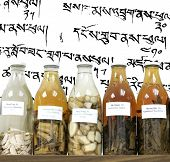 chinese medicine herbs and concoctions in large bottles on tibetan writing background