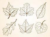 set oaf leaf sketch