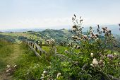 Mountain Flowers Landscape. Old Fence In Countryside Landscape. Lonely Road In Countryside Landscape poster
