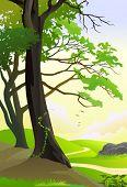Huge tropical trees by hillside