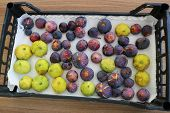 Figs. Ripe Green Figs. Ripe Purple Figs. poster