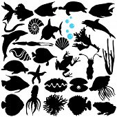foto of jellyfish  - A Vector Silhouette of Fish - JPG