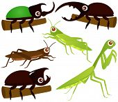 A colorful Theme of cute vector Icons : Grasshopper, Beetle, Praying Mantis