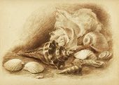 Composition from seashells. Art drawing by sepia on colored paper
