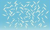 A Flock Of Birds Feeding On Vector, Silhouettes Of Flying Seagulls, Set Of Isolated Soaring Birds. G poster