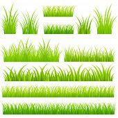 Set of vector grass. Tufts of grass.