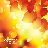 Autumn leaves background.Vector.