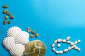 Close Up Photo Of White Shells, Stones And Abalone Shell poster