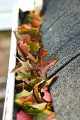 pic of downspouts  - A fall tradition - cleaning the gutters of leaves. Here we see them clogging the gutters of a traditional home. Could be used for advertising/clean up articles/etc. Narrow DOF