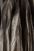 The Product Of The Roots Of Oak, The Texture Of Oak. poster