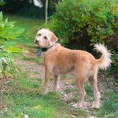 Outdoor little cross breed dog standing in the garden poster