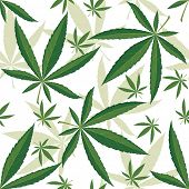 Cannabis seamless ornament over white background