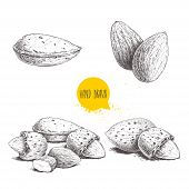 Hand Drawn Sketch Style Almond Set. Single, Group Seeds And Almond In Nutshells Group. Organic Food, poster