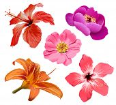 foto of hawaiian flower  - Flowers bloom - JPG