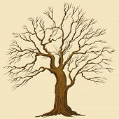 Big tree vector illustration