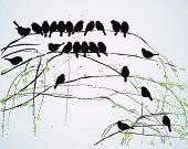 Silhouetten der Vögel sitzen auf Ästen