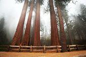 Sequoia National Park nos EUA