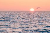 Sun Rising Over Ocean Horizon And Flying Seagull, Florida, Usa poster