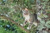 Cute Cat Is Lying On The Tree ,little Kitten On A Branch ,cute Pets Have Three Colors On A Natural G poster