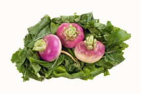 picture of turnip greens  - Three turnips on a bed of their greens - JPG