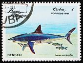 Postage stamp Cuba 1981 Shortfin Mako Shark
