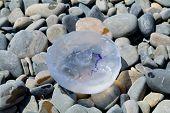 Jellyfish on stones