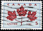A stamp printed in Canada shows Maple Leaf